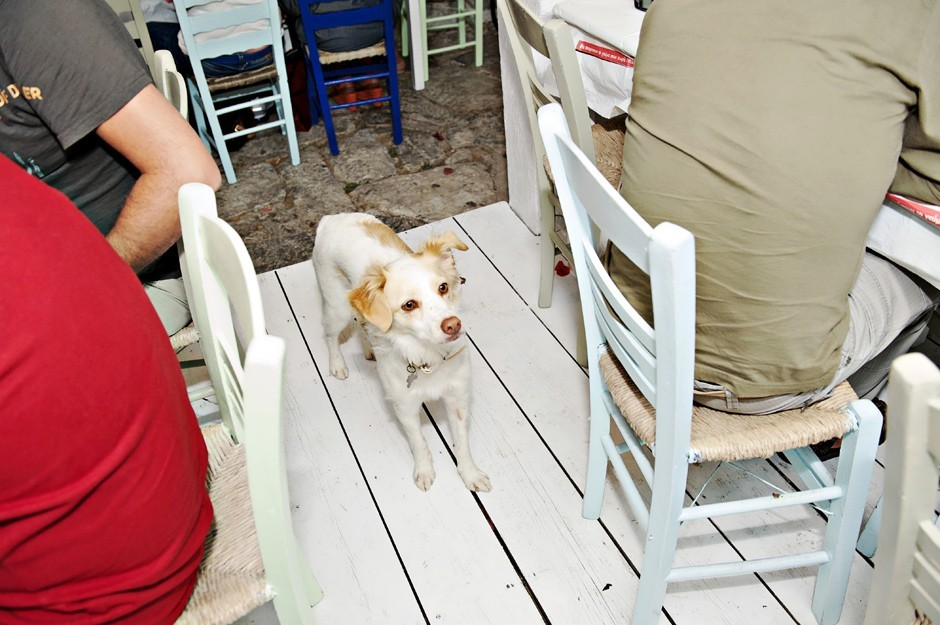 couples dog from a wedding in amorgos